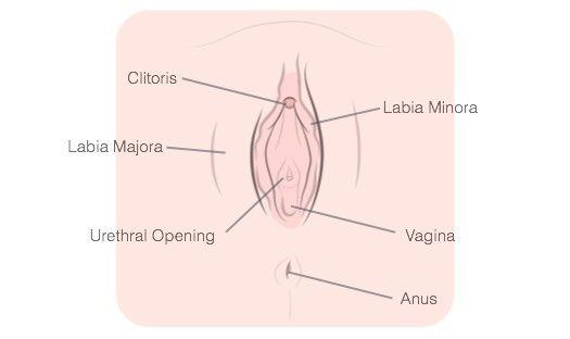 sperm salbutamol count